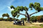 BMW F-800 GT X Encuentro GGVV 2014 Alba Tormes  (9)