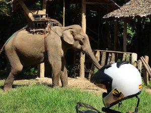 Elefante casco