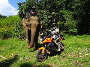 elefante moto
