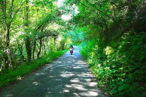 Carretera verde