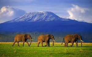elephants-three-ti_1563952c