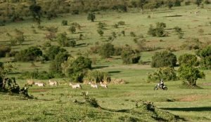 Kenia cebras Gustavo Cuervo