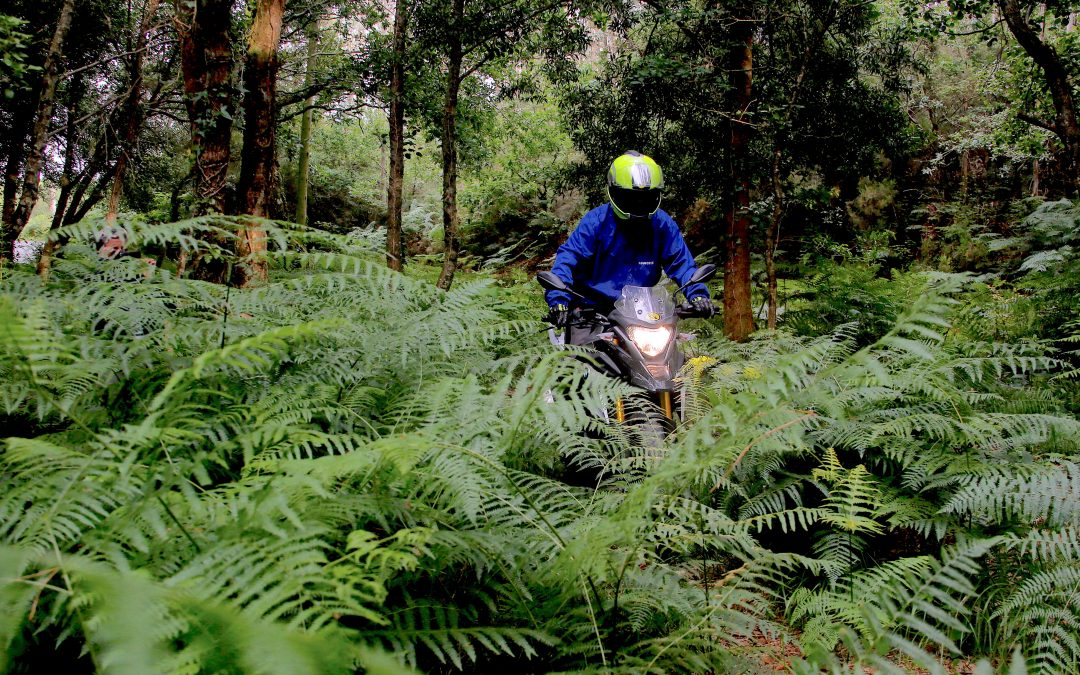 Ruta de los Faros IV. La jungla.